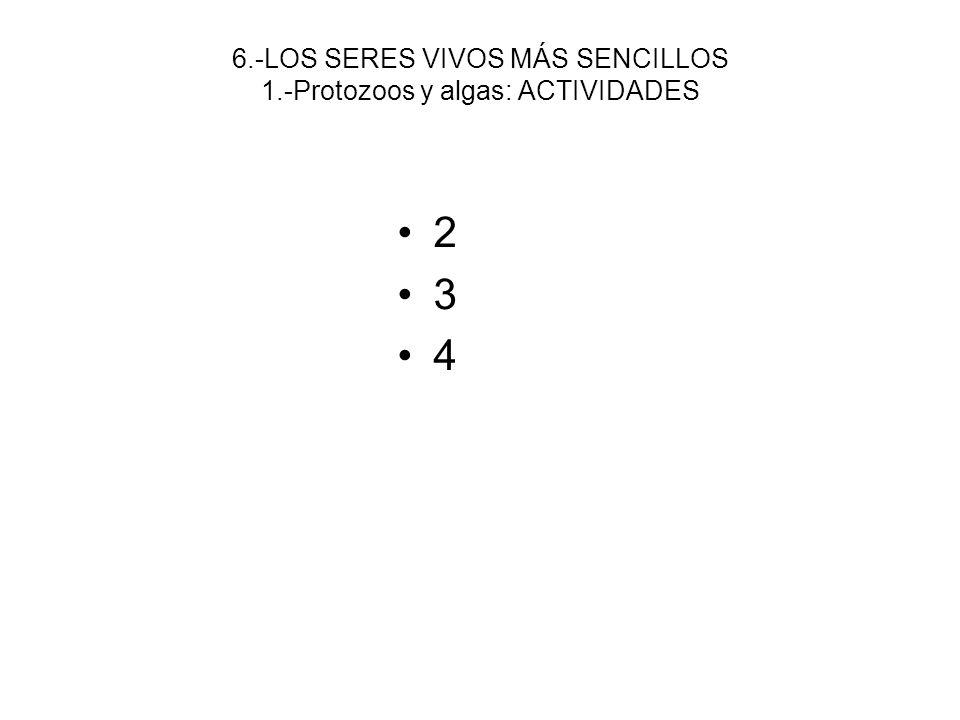 6.-LOS SERES VIVOS MÁS SENCILLOS 1.-Protozoos y algas: ACTIVIDADES 2 3 4
