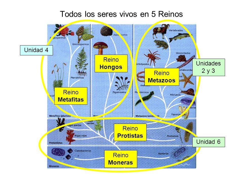 Todos los seres vivos en 5 Reinos Unidad 4 Unidad 6 Unidades 2 y 3 Reino Moneras Reino Hongos Reino Metazoos Reino Protistas Reino Metafitas