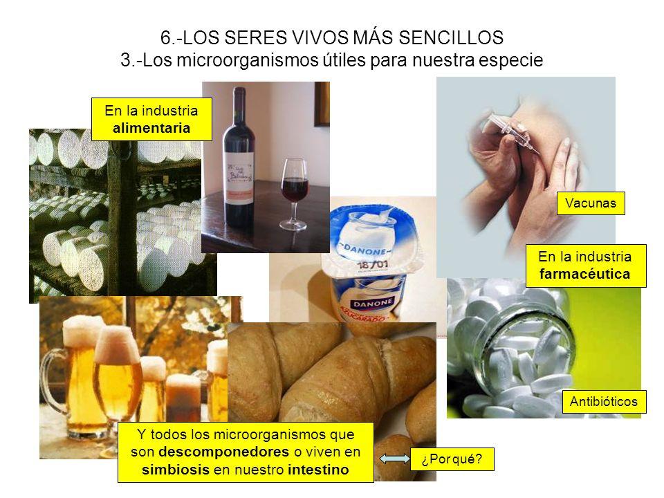 6.-LOS SERES VIVOS MÁS SENCILLOS 3.-Los microorganismos útiles para nuestra especie En la industria alimentaria En la industria farmacéutica Vacunas A