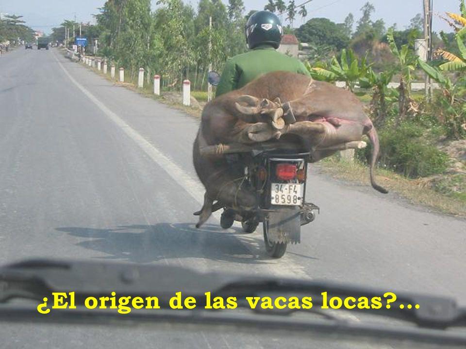 ¿El origen de las vacas locas?…