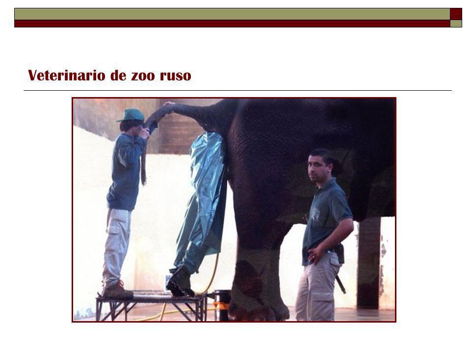 Pintor rumano