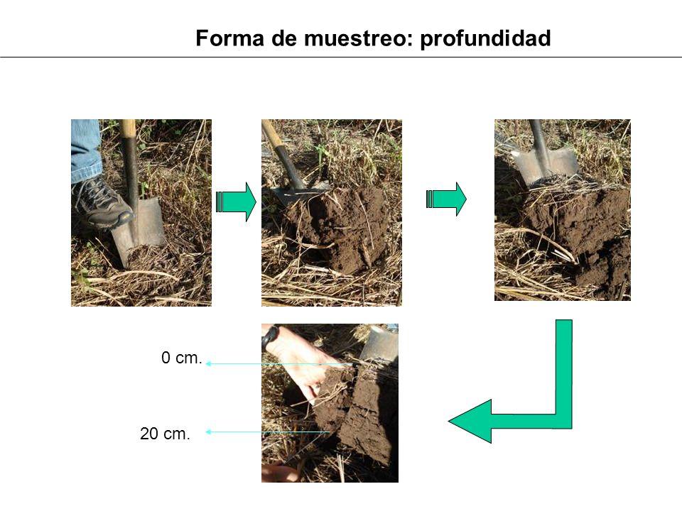 Forma de muestreo: profundidad 0 cm. 20 cm.