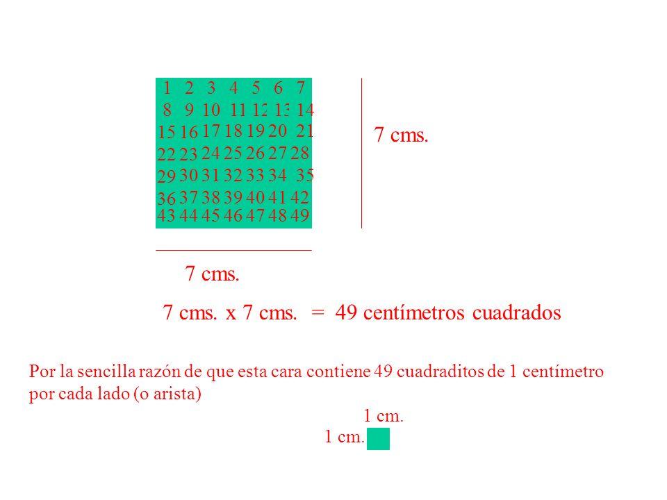 7 cms. 1234567 891011121314 1516 1718192021 2223 2425262728 29 303132333435 36 373839404142 43444546474849 7 cms. x 7 cms. = 49 centímetros cuadrados