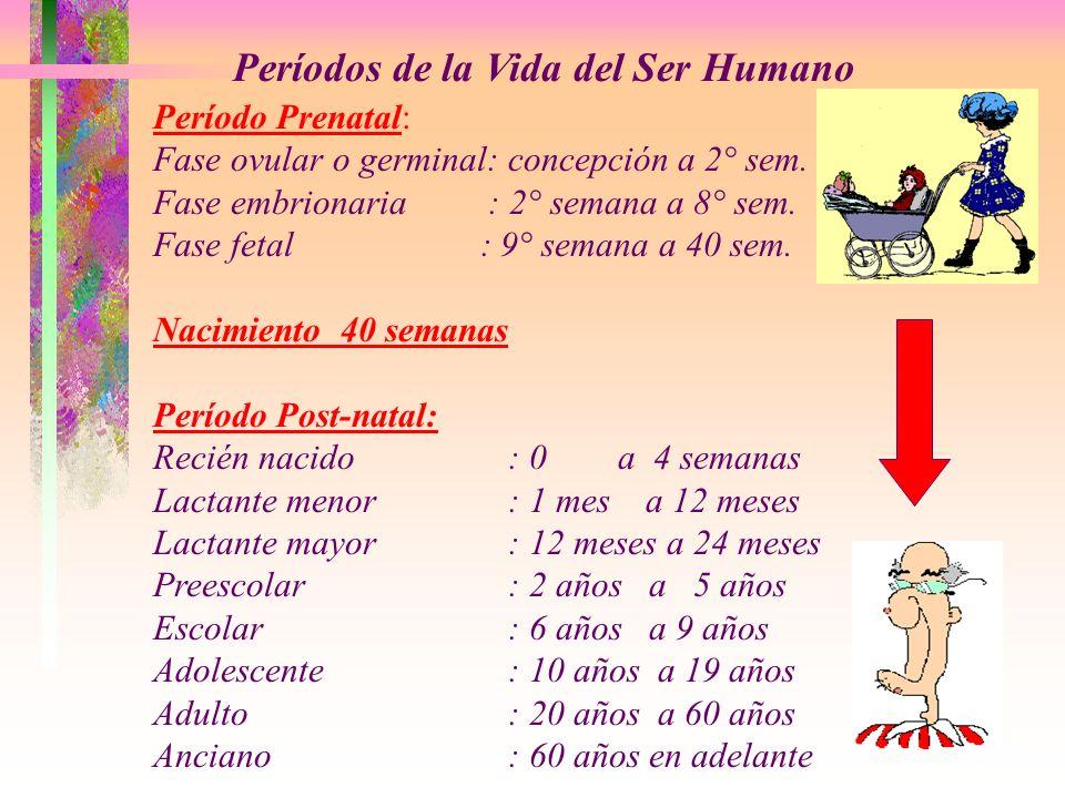 Períodos de la Vida del Ser Humano Período Prenatal: Fase ovular o germinal: concepción a 2° sem. Fase embrionaria : 2° semana a 8° sem. Fase fetal :