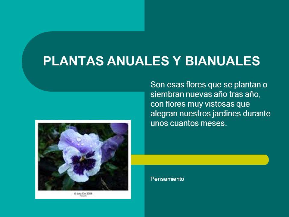 Plantas anuales PLANTAS ANUALES o, más comúnmente llamadas PLANTAS DE TEMPORADA, son aquellas plantas herbáceas (o sea, que no son leñosas, como lo son árboles y arbustos) que tienen una vida de unos cuantos meses.