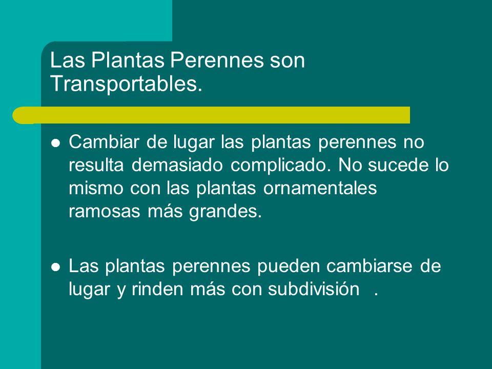 Las Plantas Perennes son Transportables. Cambiar de lugar las plantas perennes no resulta demasiado complicado. No sucede lo mismo con las plantas orn