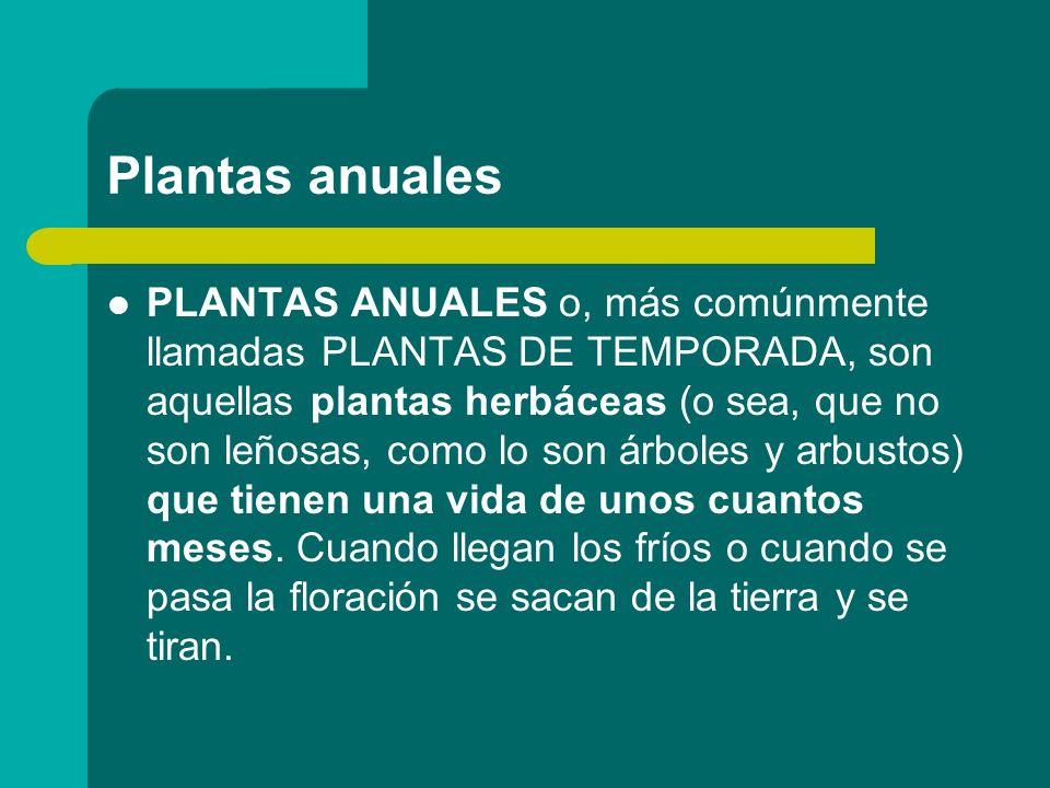 Plantas anuales PLANTAS ANUALES o, más comúnmente llamadas PLANTAS DE TEMPORADA, son aquellas plantas herbáceas (o sea, que no son leñosas, como lo so