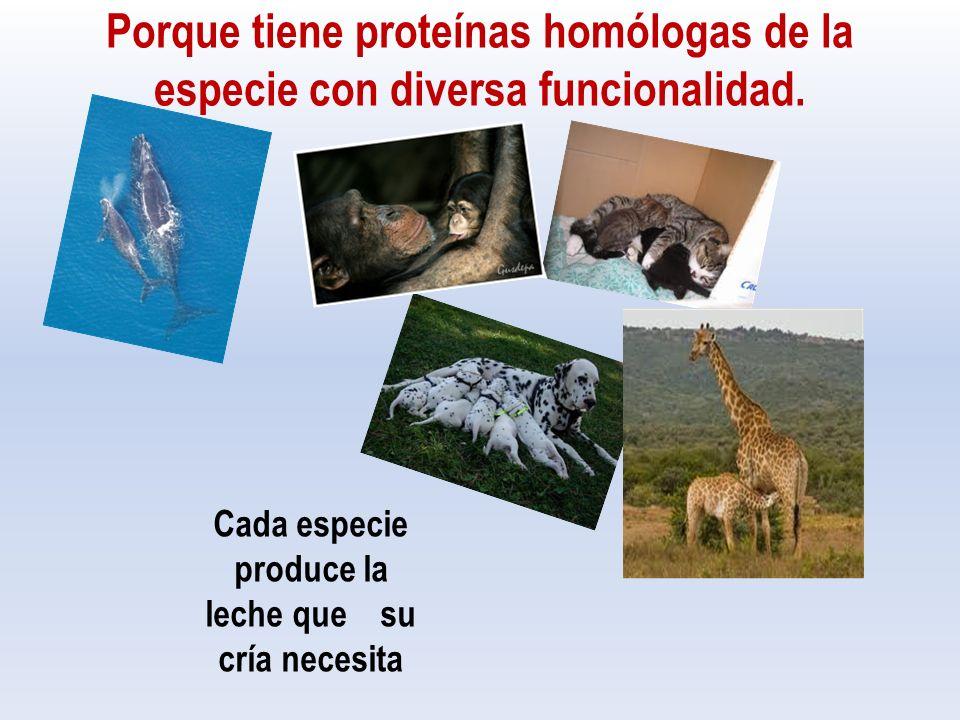 Porque tiene proteínas homólogas de la especie con diversa funcionalidad.