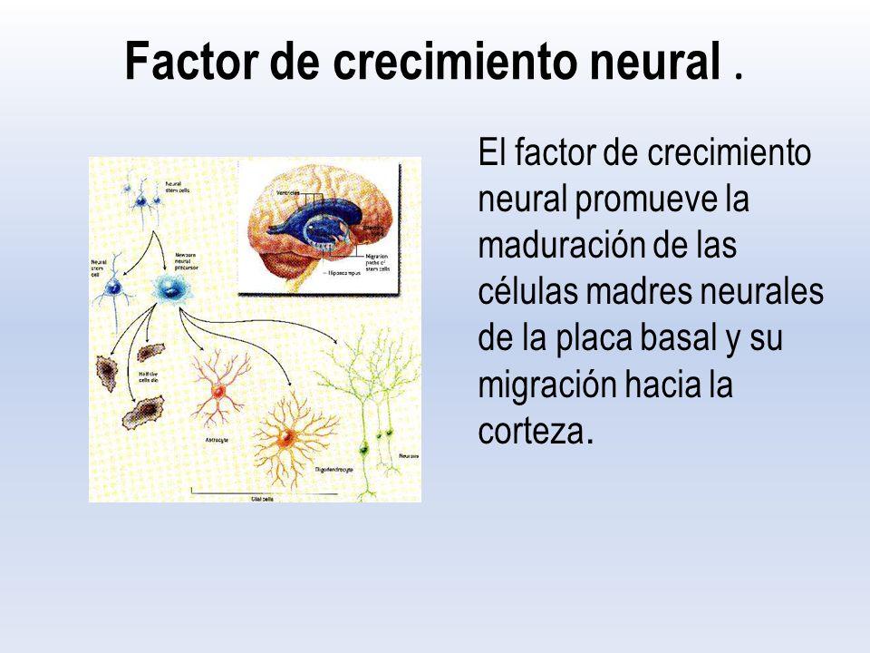 Factor de crecimiento neural.