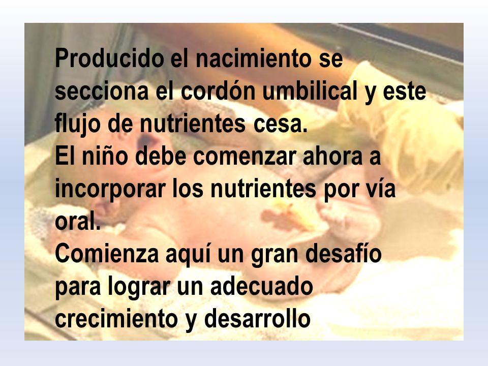 Producido el nacimiento se secciona el cordón umbilical y este flujo de nutrientes cesa.