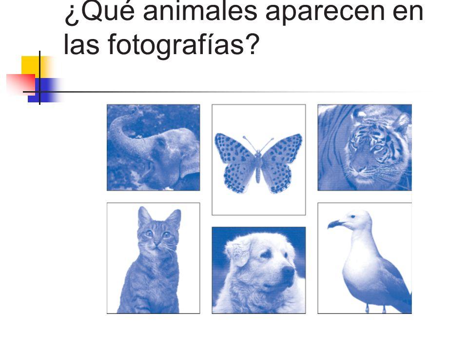 ¿Qué animales aparecen en las fotografías?