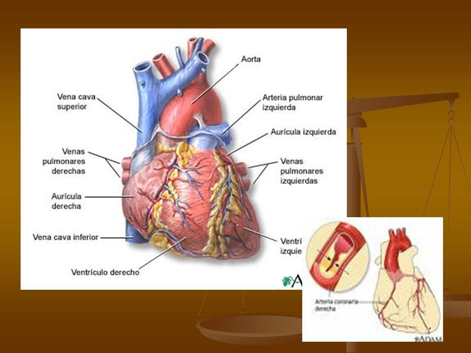 Stress mental y depresión Debe ser considerado como un factor modificable Debe ser considerado como un factor modificable Estimulo adrenérgico incrementa el consumo de oxigeno del corazón Estimulo adrenérgico incrementa el consumo de oxigeno del corazón Vasoconstricción, disfunción endotelial, arritmias ventriculares, síndrome metabólico Vasoconstricción, disfunción endotelial, arritmias ventriculares, síndrome metabólico La depresión asociada con el doble de hipertensión, y un incremento de eventos vasculares.