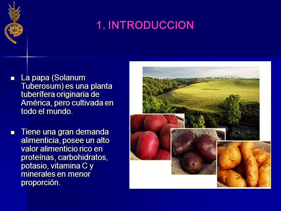 1. INTRODUCCION La papa (Solanum Tuberosum) es una planta tuberífera originaria de América, pero cultivada en todo el mundo. La papa (Solanum Tuberosu