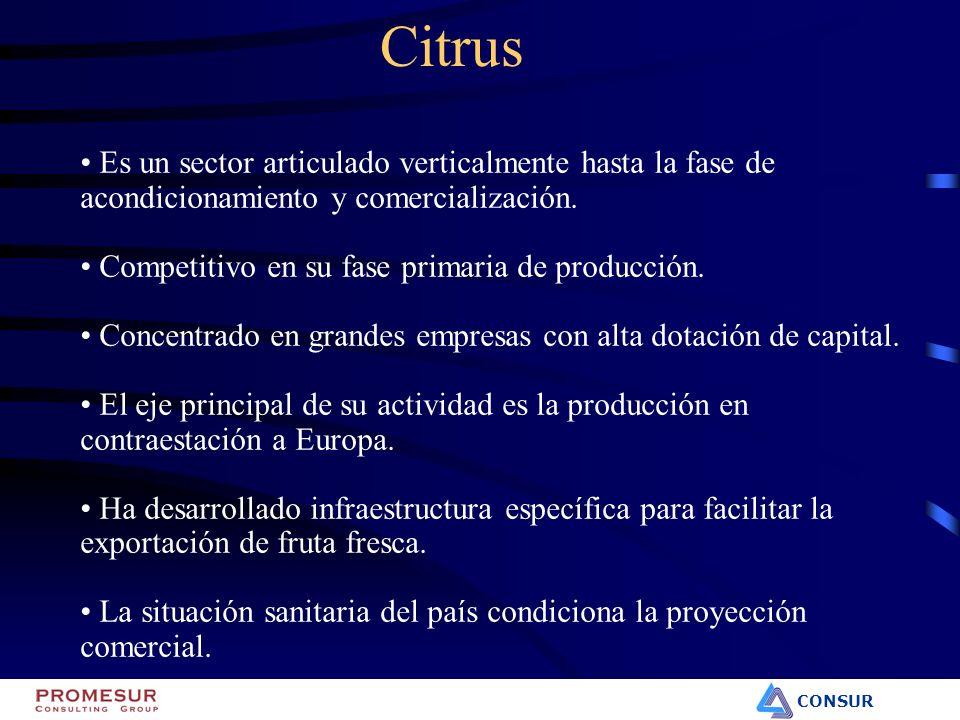 CONSUR Citrus Es un sector articulado verticalmente hasta la fase de acondicionamiento y comercialización. Competitivo en su fase primaria de producci