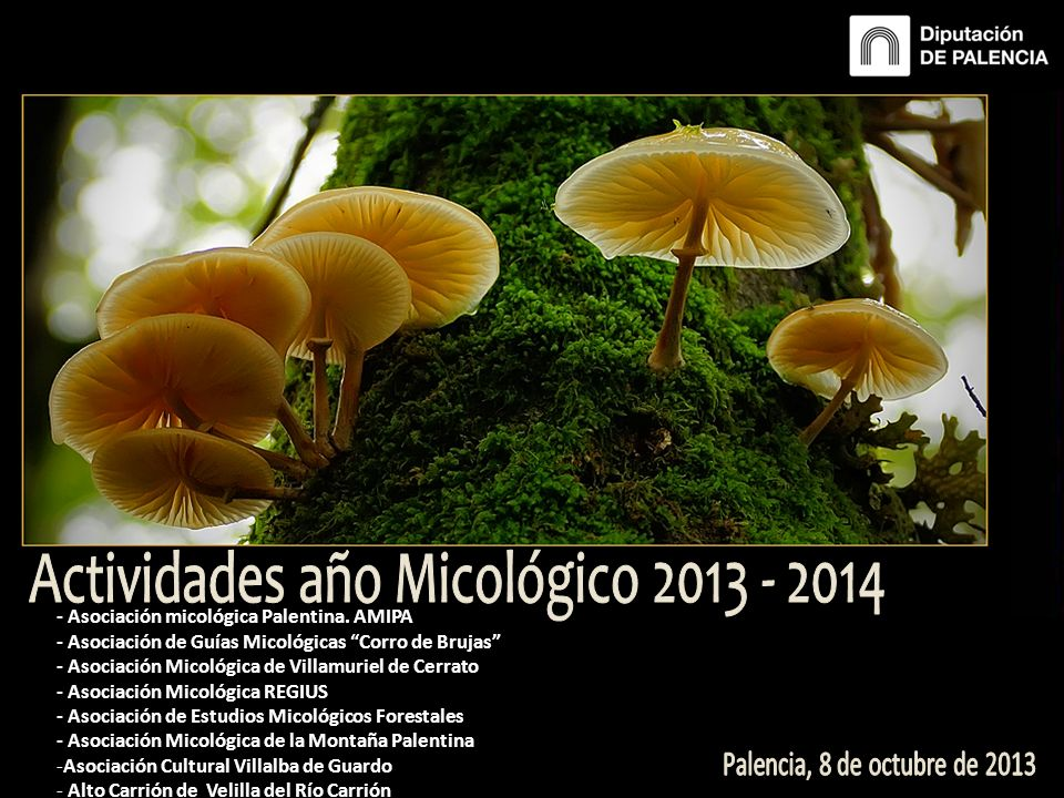 - Asociación micológica Palentina. AMIPA - Asociación de Guías Micológicas Corro de Brujas - Asociación Micológica de Villamuriel de Cerrato - Asociac