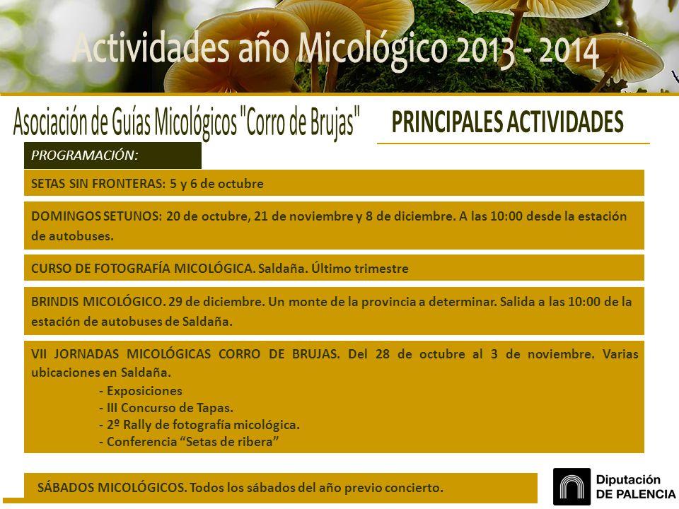 VII JORNADAS MICOLÓGICAS CORRO DE BRUJAS. Del 28 de octubre al 3 de noviembre. Varias ubicaciones en Saldaña. - Exposiciones - III Concurso de Tapas.