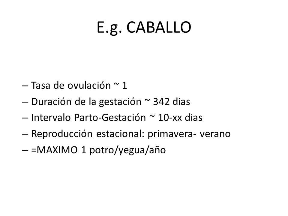 E.g. CABALLO – Tasa de ovulación ~ 1 – Duración de la gestación ~ 342 dias – Intervalo Parto-Gestación ~ 10-xx dias – Reproducción estacional: primave
