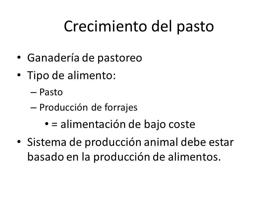 Crecimiento del pasto Ganadería de pastoreo Tipo de alimento: – Pasto – Producción de forrajes = alimentación de bajo coste Sistema de producción anim
