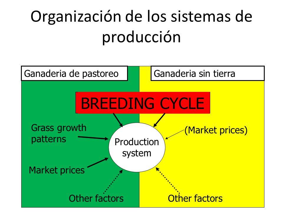 Organización de los sistemas de producción Ganaderia de pastoreoGanaderia sin tierra Production system BREEDING CYCLE Grass growth patterns Market pri