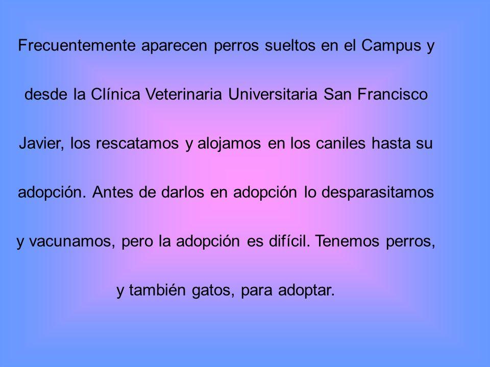 Frecuentemente aparecen perros sueltos en el Campus y desde la Clínica Veterinaria Universitaria San Francisco Javier, los rescatamos y alojamos en los caniles hasta su adopción.