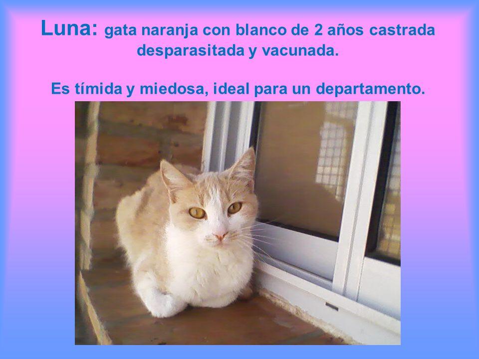 Luna: gata naranja con blanco de 2 años castrada desparasitada y vacunada. Es tímida y miedosa, ideal para un departamento.