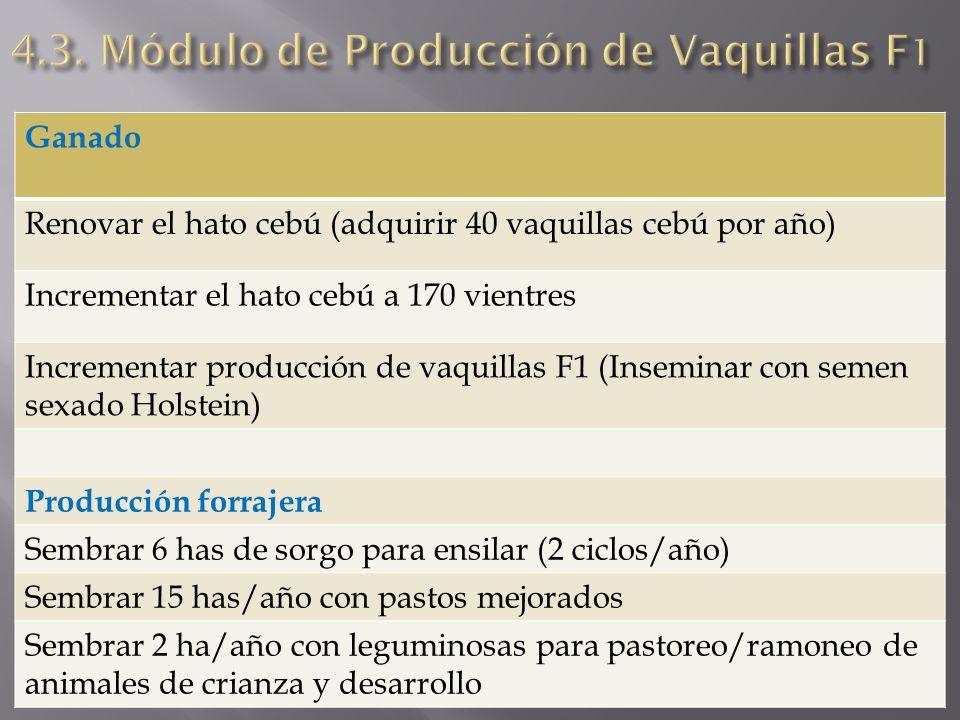 Ganado Renovar el hato cebú (adquirir 40 vaquillas cebú por año) Incrementar el hato cebú a 170 vientres Incrementar producción de vaquillas F1 (Insem