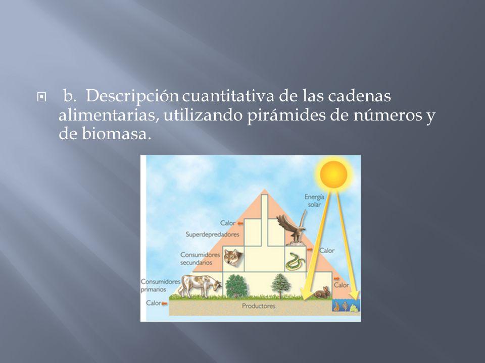 b. Descripción cuantitativa de las cadenas alimentarias, utilizando pirámides de números y de biomasa.