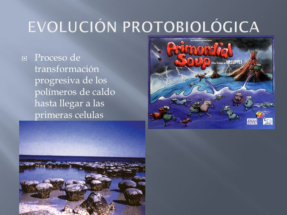Proceso de transformación progresiva de los polímeros de caldo hasta llegar a las primeras celulas