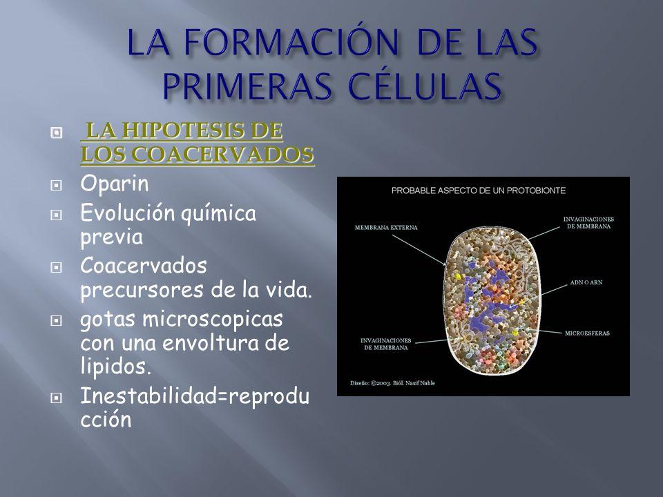 LA HIPOTESIS DE LOS COACERVADOS LA HIPOTESIS DE LOS COACERVADOS Oparin Evolución química previa Coacervados precursores de la vida. gotas microscopica