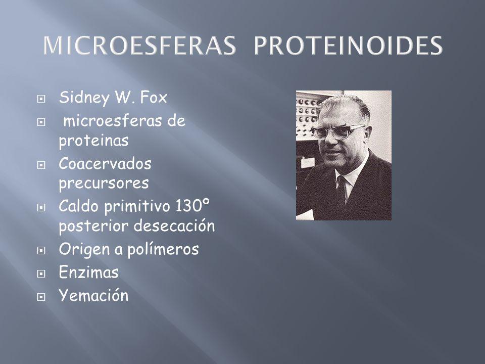 Sidney W. Fox microesferas de proteinas Coacervados precursores Caldo primitivo 130º posterior desecación Origen a polímeros Enzimas Yemación
