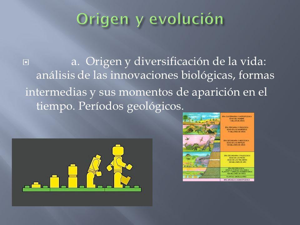 a. Origen y diversificación de la vida: análisis de las innovaciones biológicas, formas intermedias y sus momentos de aparición en el tiempo. Períodos