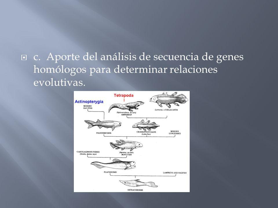 c. Aporte del análisis de secuencia de genes homólogos para determinar relaciones evolutivas.