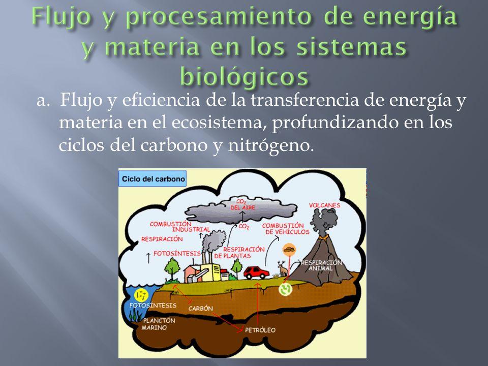 a. Flujo y eficiencia de la transferencia de energía y materia en el ecosistema, profundizando en los ciclos del carbono y nitrógeno.