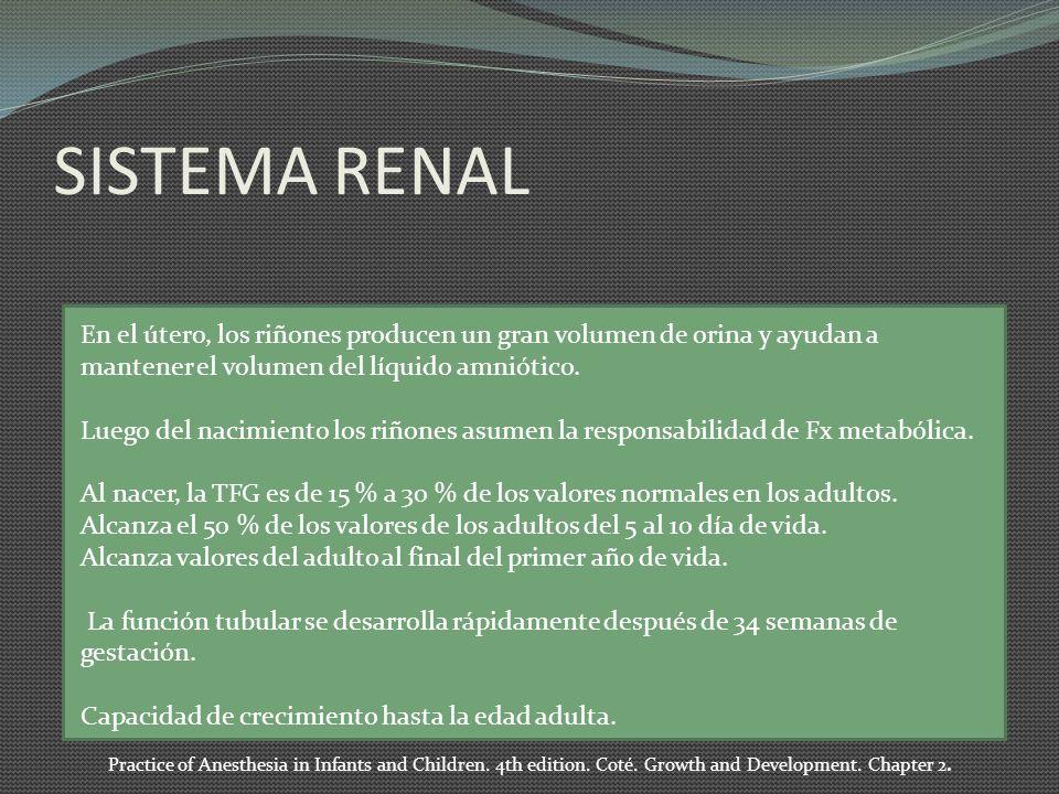 SISTEMA RENAL En el útero, los riñones producen un gran volumen de orina y ayudan a mantener el volumen del líquido amniótico. Luego del nacimiento lo