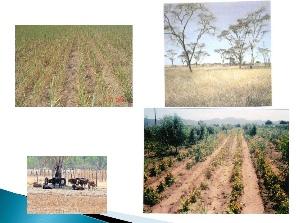 Las etapas jóvenes del crecimiento de una planta son las más sensibles y vulnerables a climas extremos.