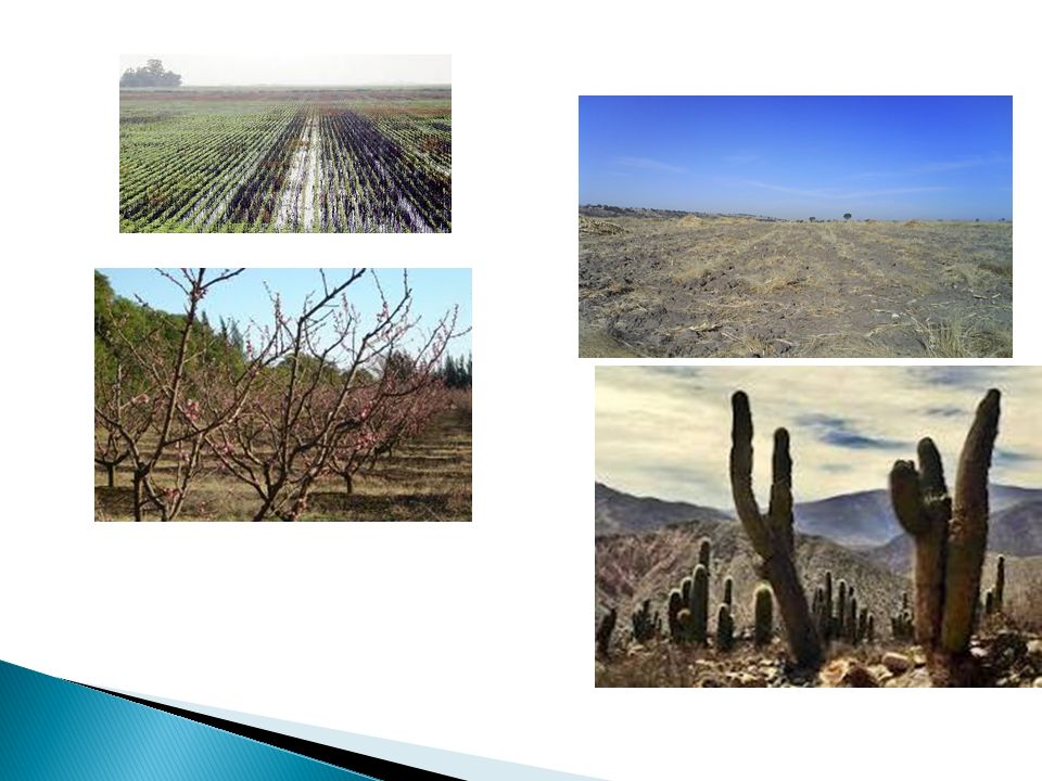 Las altas temperaturas afectan a las plantas directamente aumentando la tasa de evaporación.