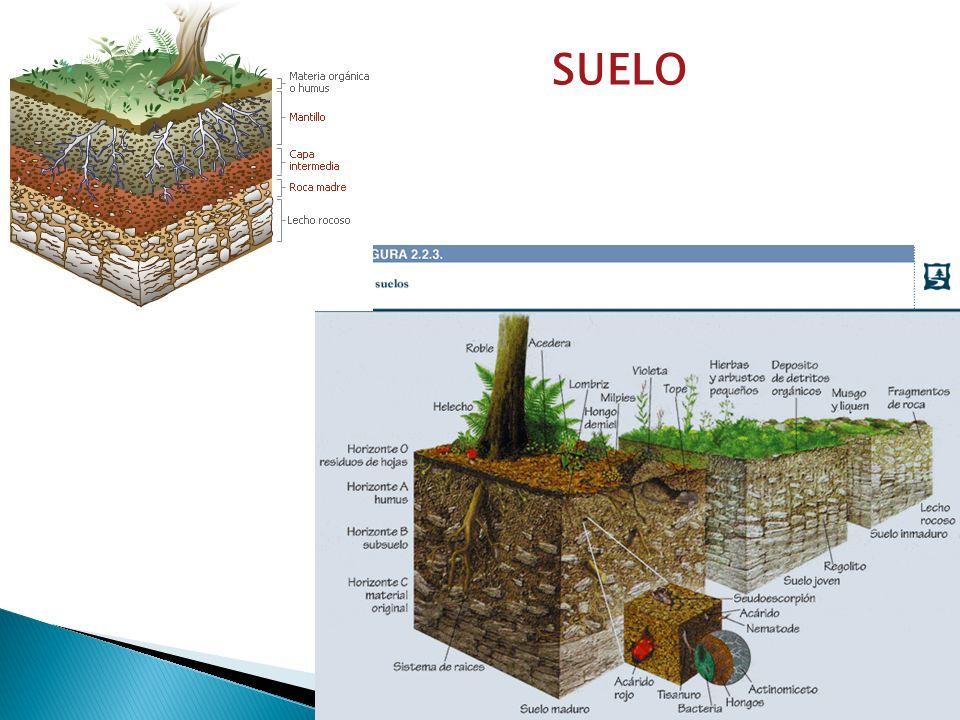 Cada tipo de planta tiene características diferentes, por eso no todas crecen igual en todos los tipos de entornos y en los mismos rangos de temperatura.