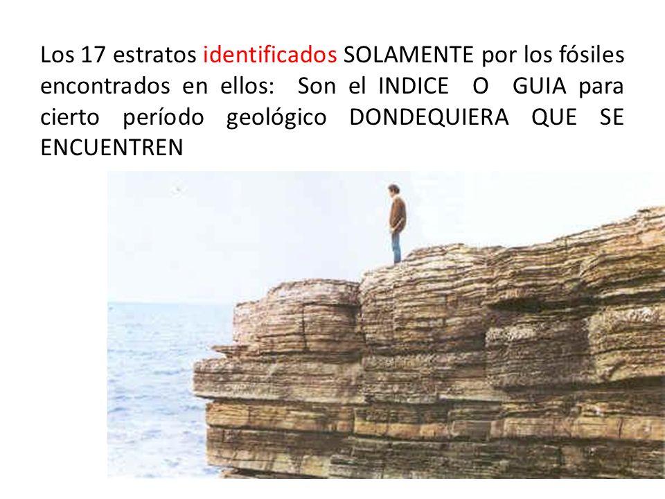 Los 17 estratos identificados SOLAMENTE por los fósiles encontrados en ellos: Son el INDICE O GUIA para cierto período geológico DONDEQUIERA QUE SE EN