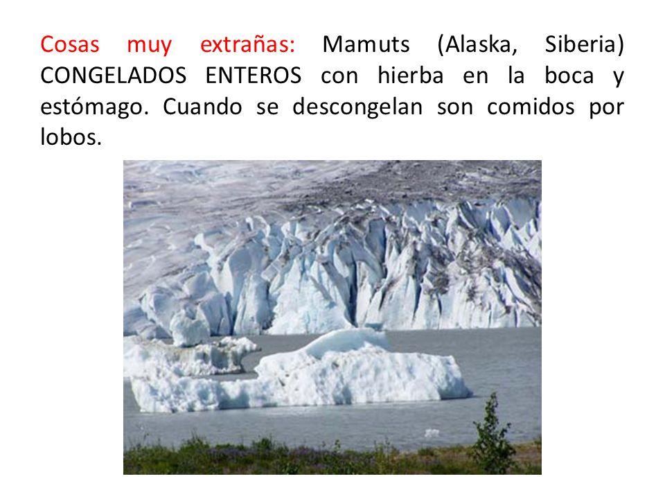Cosas muy extrañas: Mamuts (Alaska, Siberia) CONGELADOS ENTEROS con hierba en la boca y estómago. Cuando se descongelan son comidos por lobos.