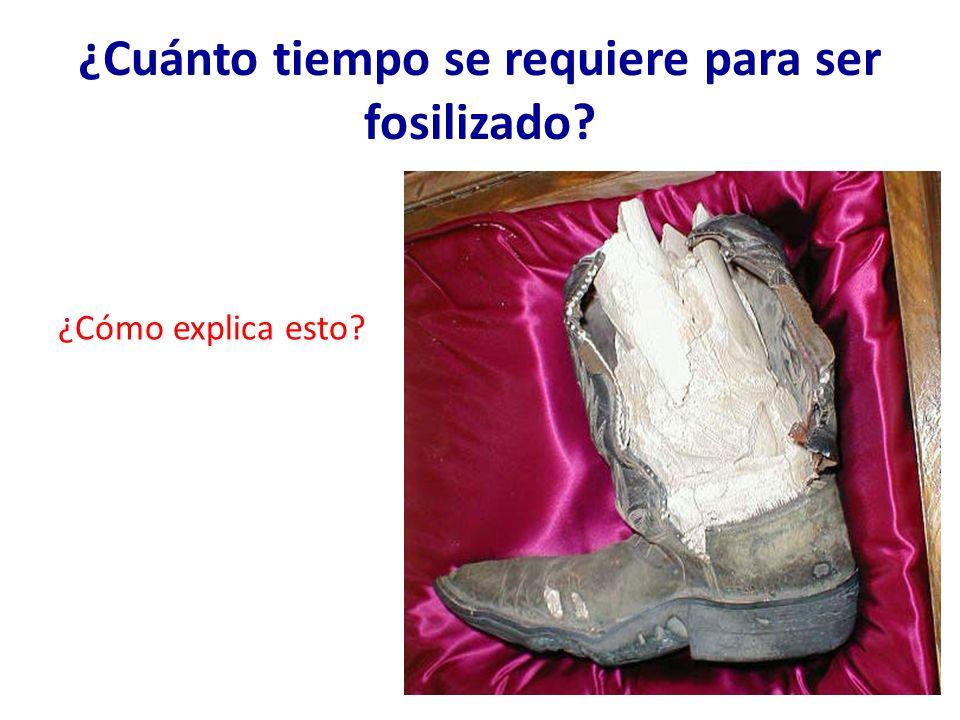¿Cuánto tiempo se requiere para ser fosilizado? ¿Cómo explica esto?