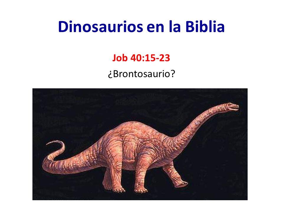 Dinosaurios en la Biblia Job 40:15-23 ¿Brontosaurio?