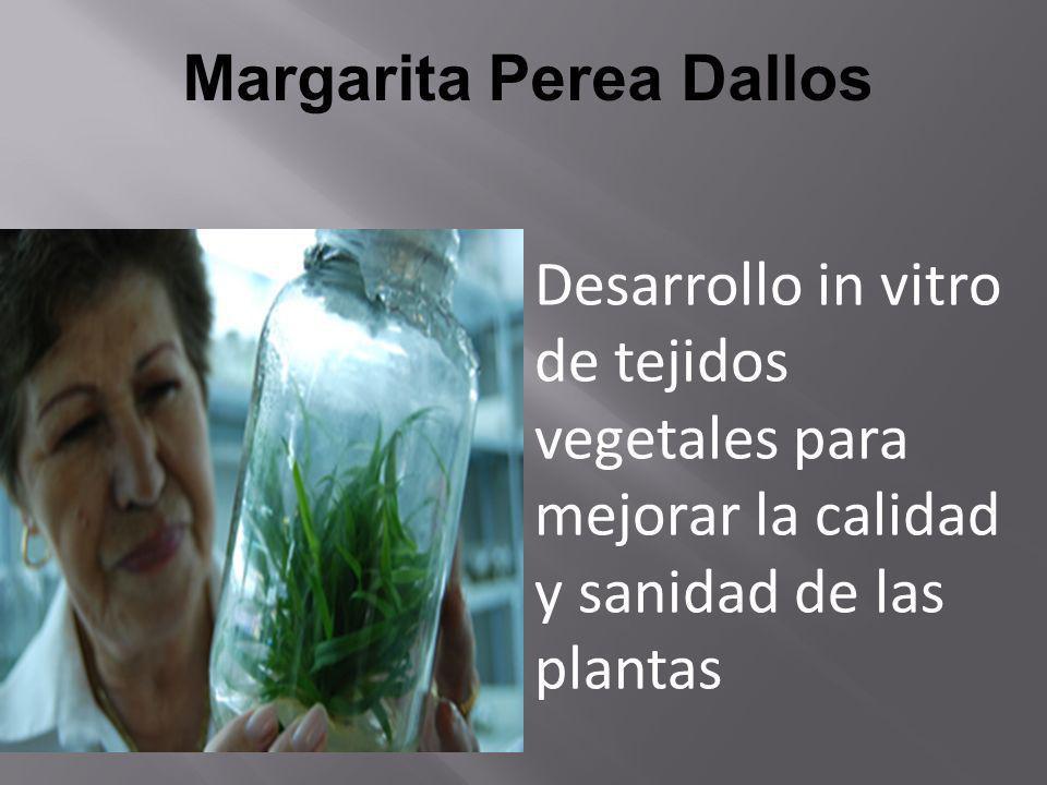 Margarita Perea Dallos Desarrollo in vitro de tejidos vegetales para mejorar la calidad y sanidad de las plantas