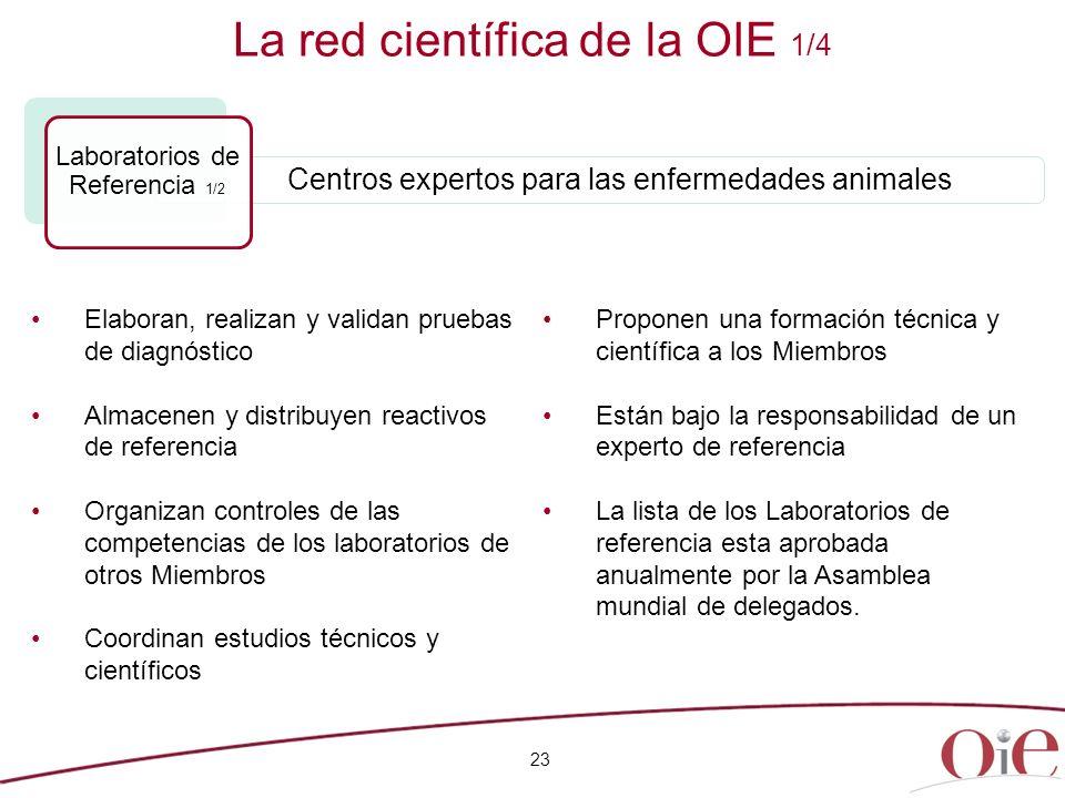 23 La red científica de la OIE 1/4 Elaboran, realizan y validan pruebas de diagnóstico Almacenen y distribuyen reactivos de referencia Organizan contr