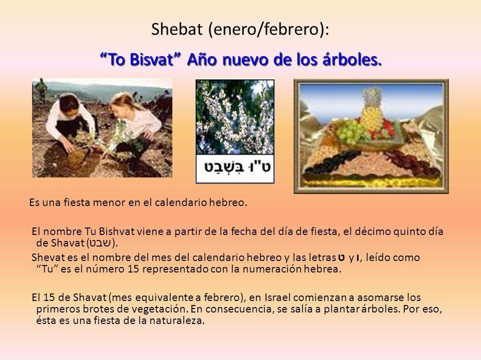 To Bisvat Año nuevo de los árboles. Shebat (enero/febrero): To Bisvat Año nuevo de los árboles. Es una fiesta menor en el calendario hebreo. El nombre