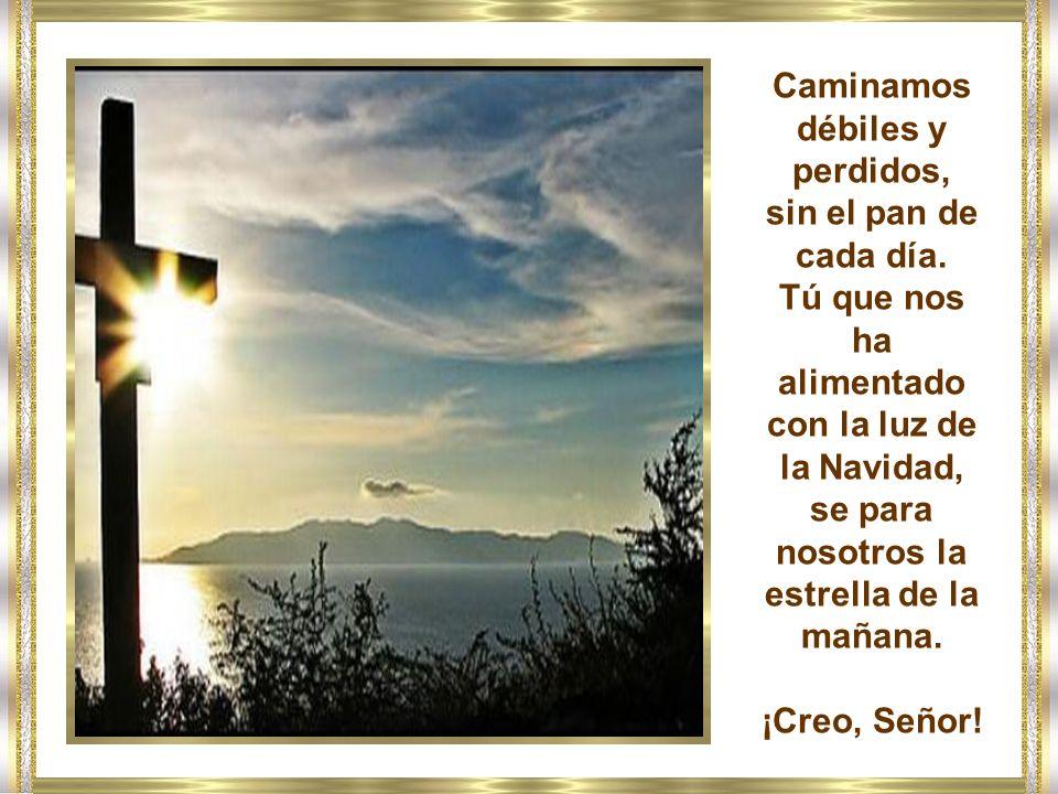 Creo, Señor, adauge nobis fidem (aumentes nuestra fe