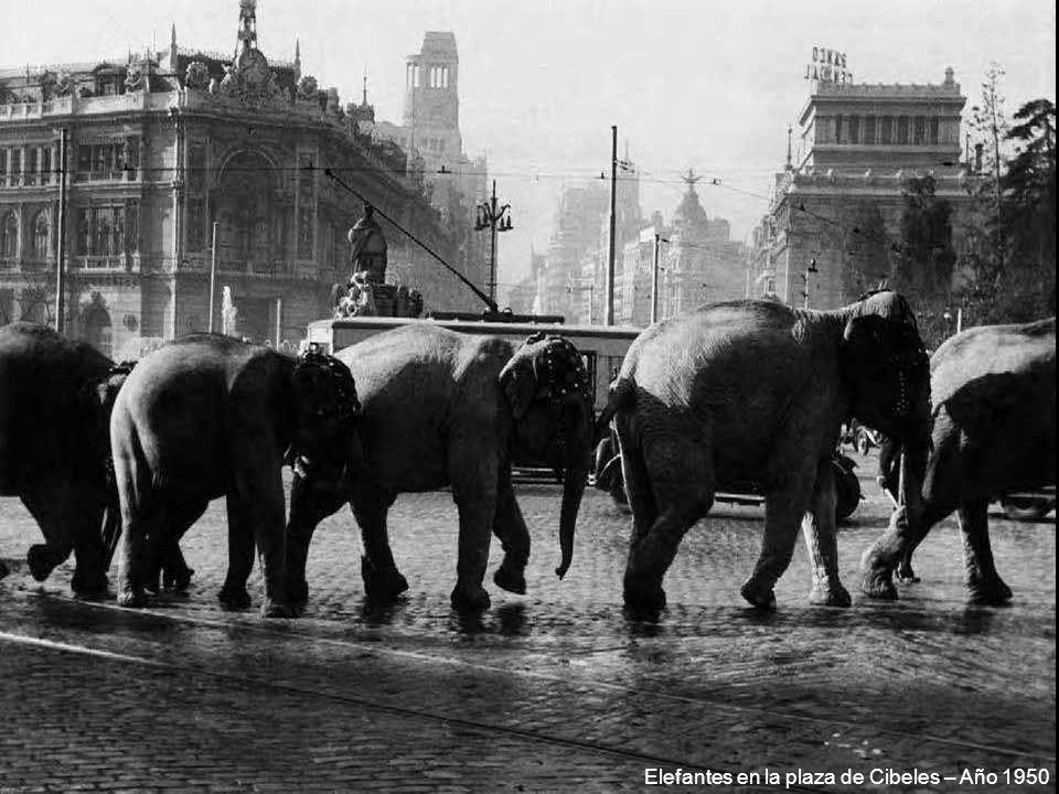 Elefantes en la plaza de Cibeles – Año 1950