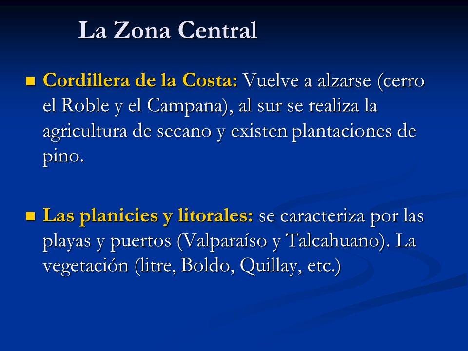 La Zona Central Cordillera de la Costa: Vuelve a alzarse (cerro el Roble y el Campana), al sur se realiza la agricultura de secano y existen plantacio