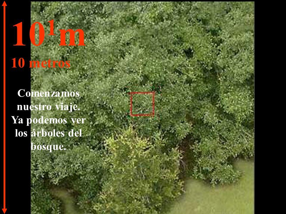 10 1 m 10 metros Comenzamos nuestro viaje. Ya podemos ver los árboles del bosque.