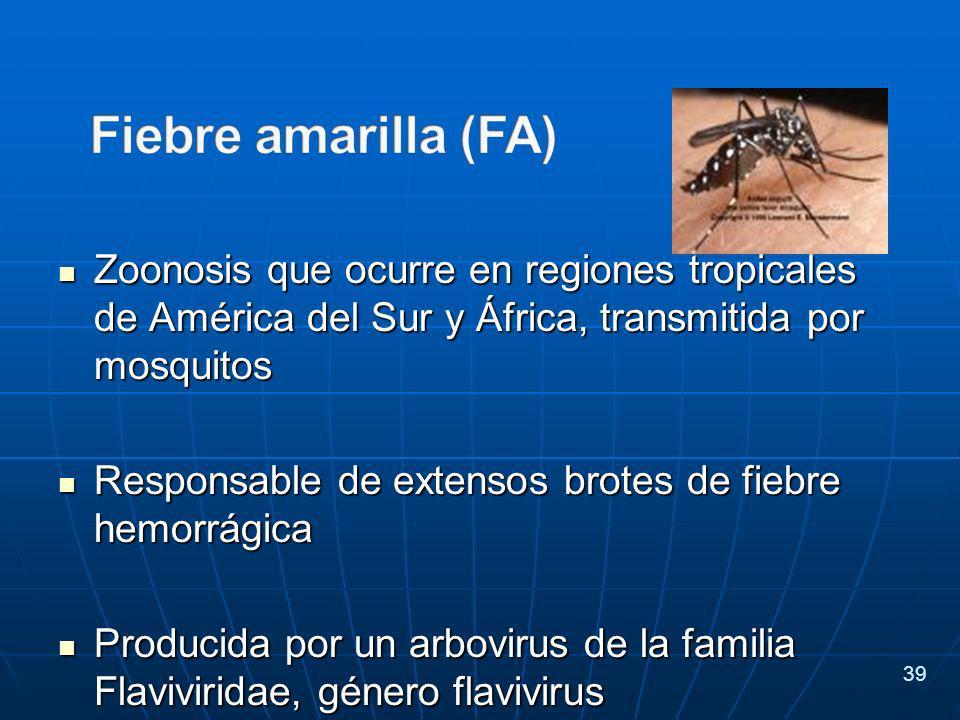 Zoonosis que ocurre en regiones tropicales de América del Sur y África, transmitida por mosquitos Zoonosis que ocurre en regiones tropicales de América del Sur y África, transmitida por mosquitos Responsable de extensos brotes de fiebre hemorrágica Responsable de extensos brotes de fiebre hemorrágica Producida por un arbovirus de la familia Flaviviridae, género flavivirus Producida por un arbovirus de la familia Flaviviridae, género flavivirus 39