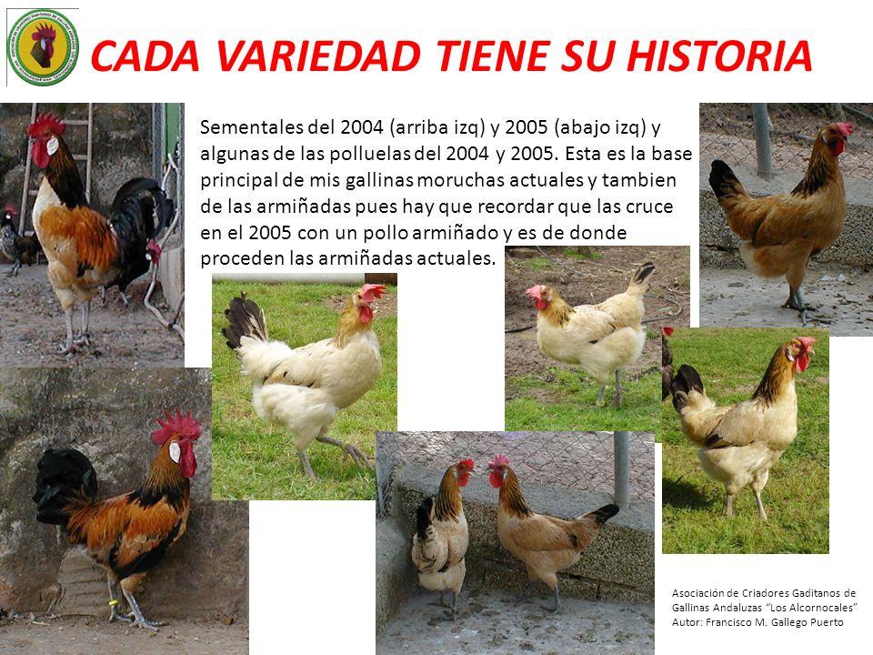 CADA VARIEDAD TIENE SU HISTORIA Sementales del 2004 (arriba izq) y 2005 (abajo izq) y algunas de las polluelas del 2004 y 2005. Esta es la base princi